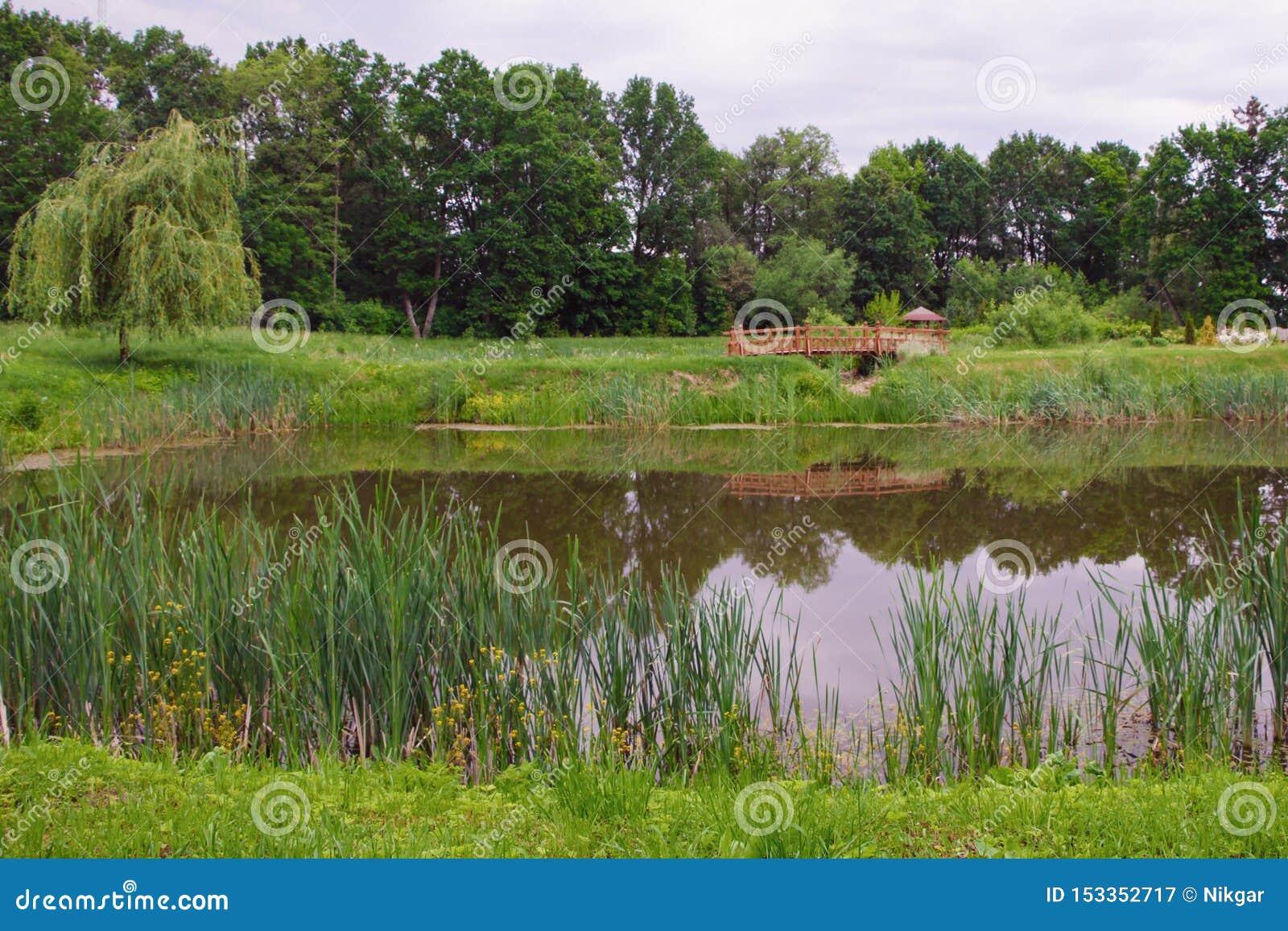 池塘在夏天公园