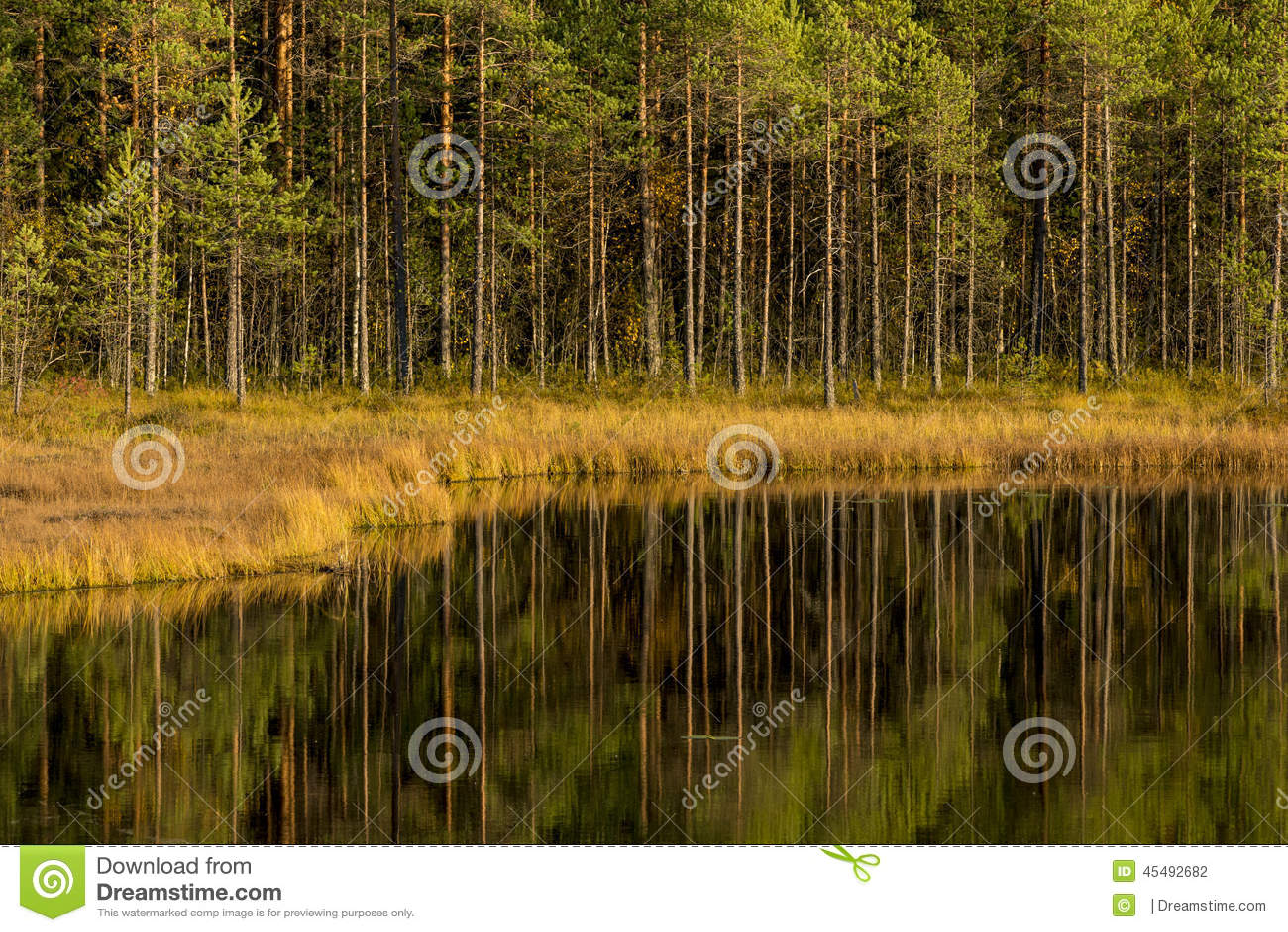 池塘在森林里