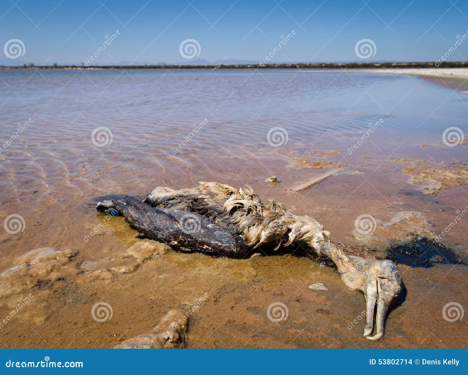 图片来源:生态环境部方微博2019年2月各省主要污染类型占比图片 农村