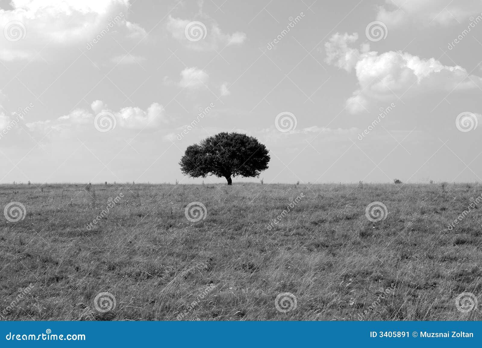 沈默结构树