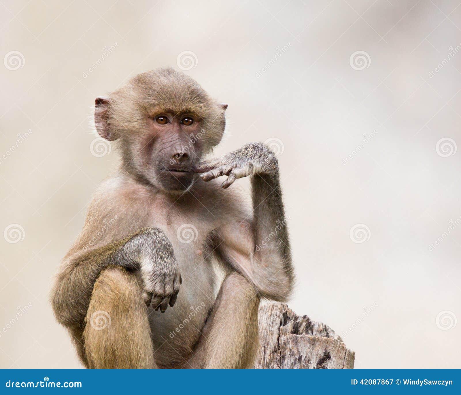 沉思的猴子