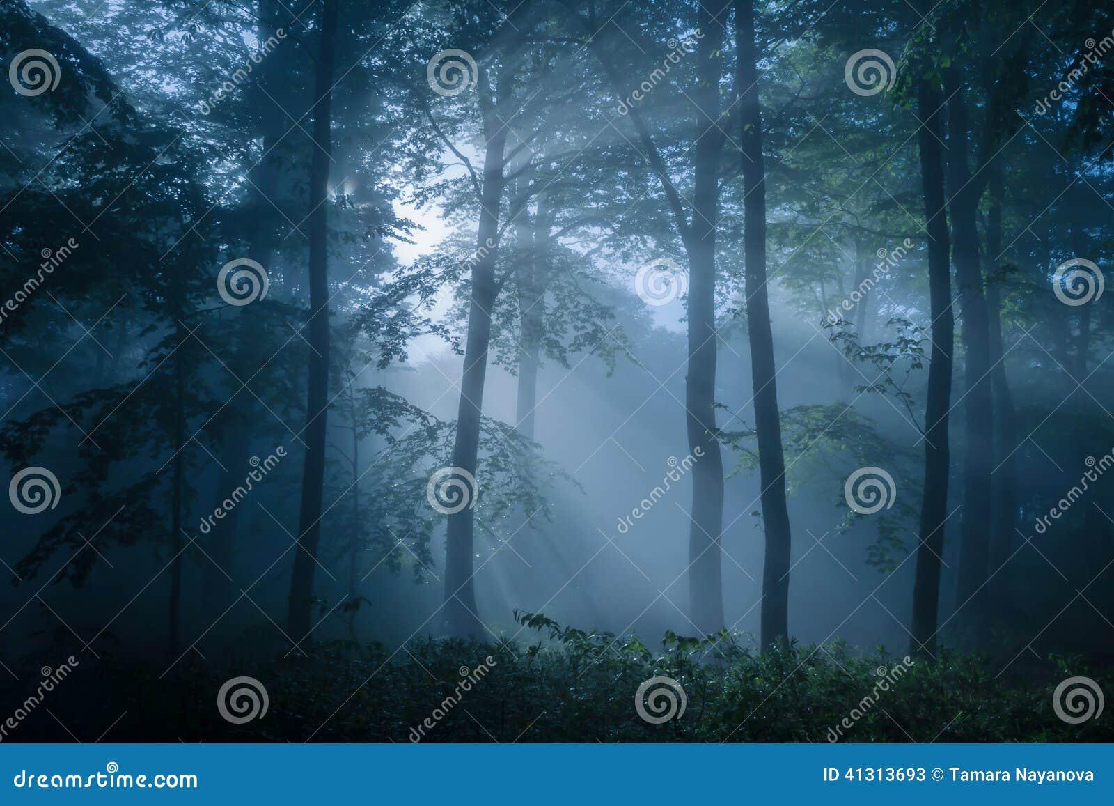 阴沉的森林充满昏暗的光
