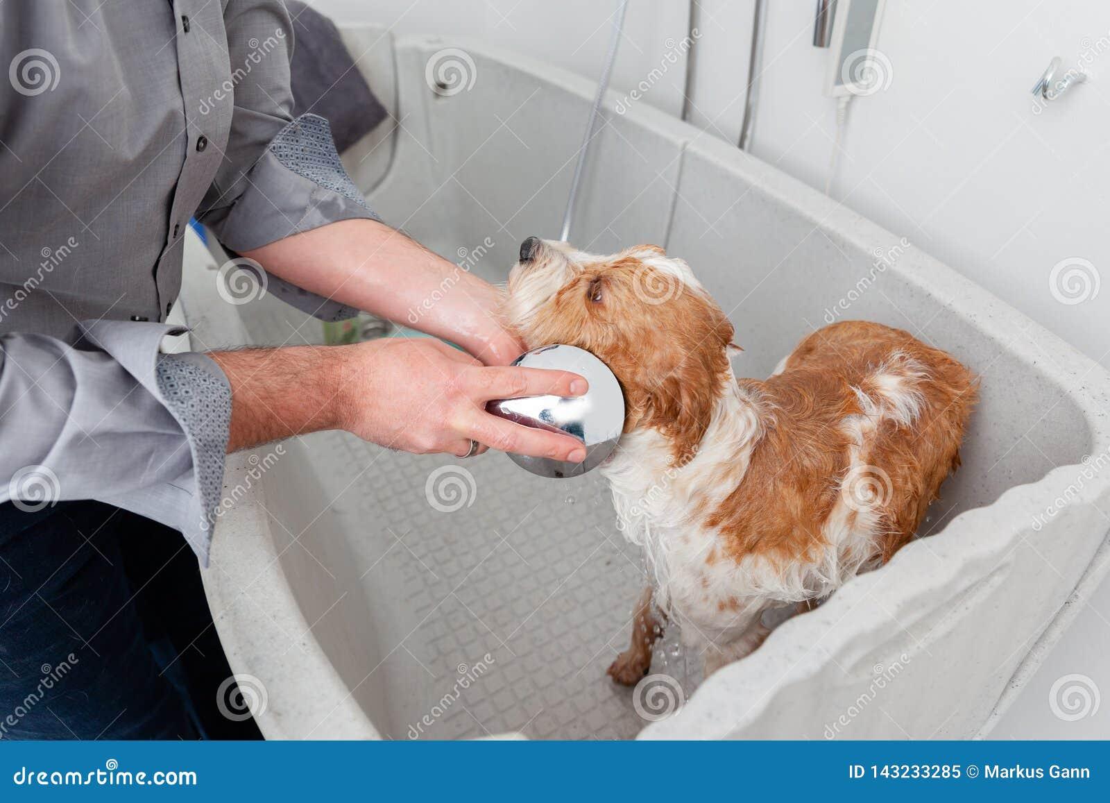沐浴一条逗人喜爱的狗