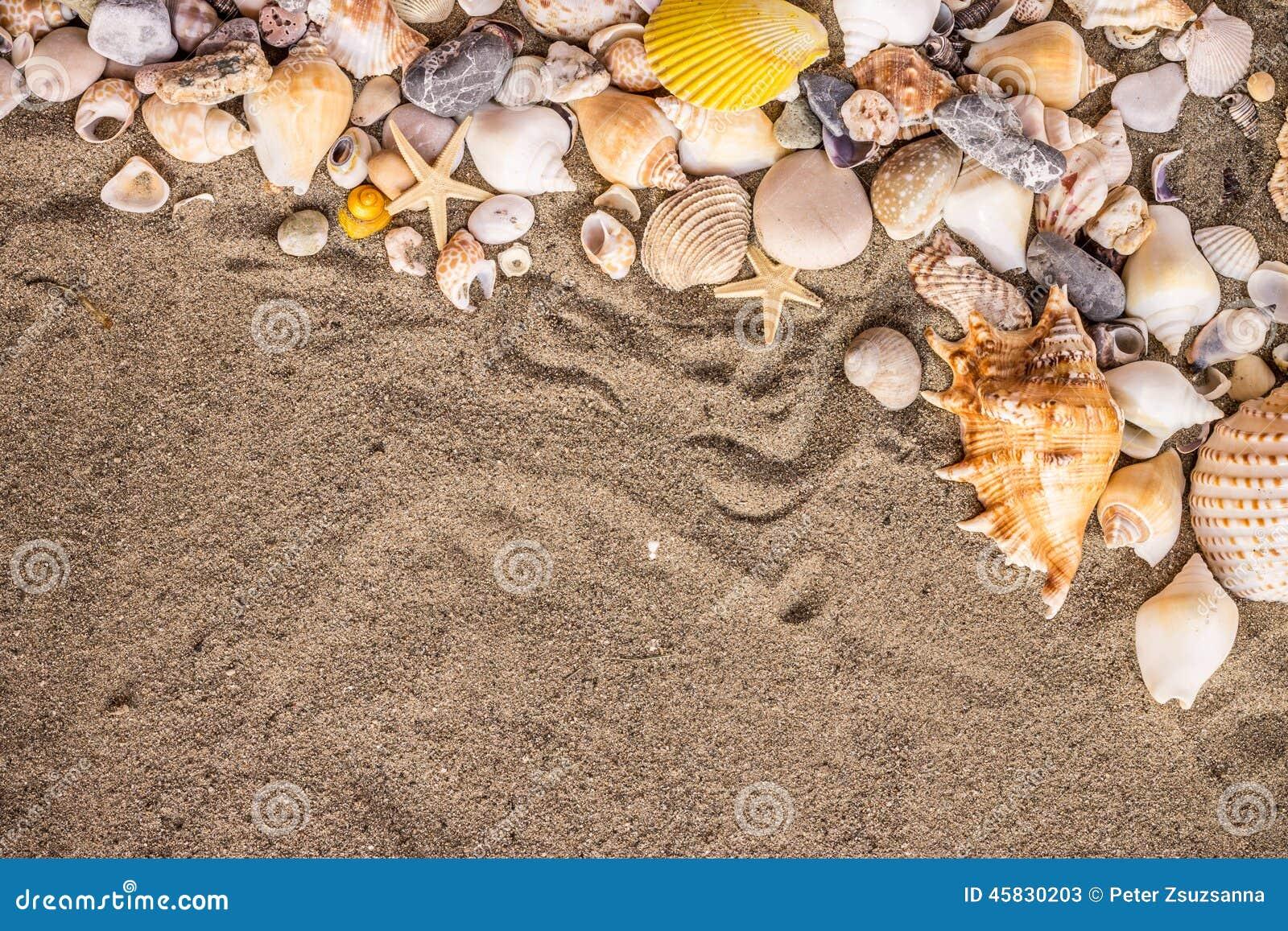 沙子和shekk