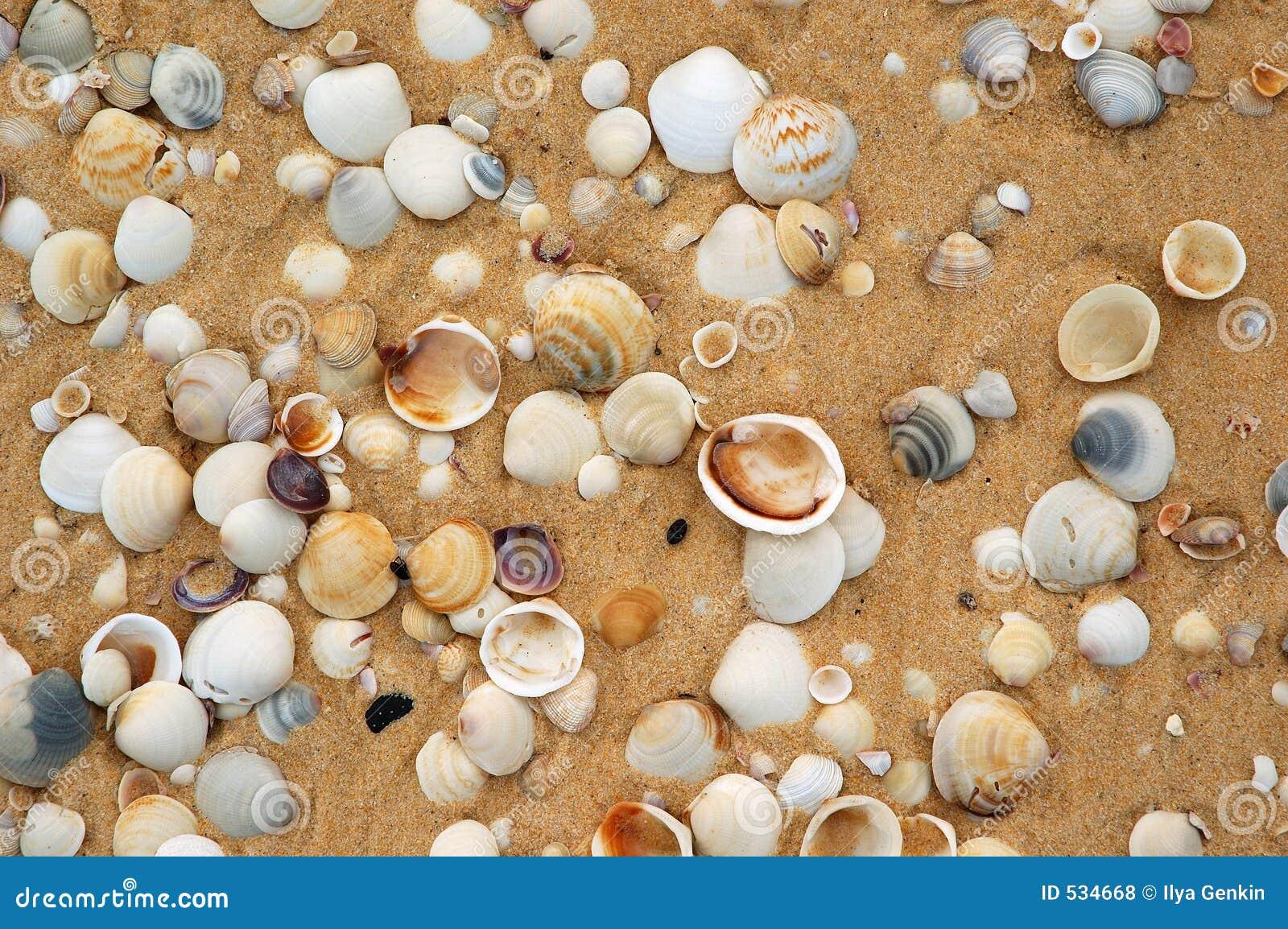 Download 沙子壳 库存照片. 图片 包括有 岩石, 水生, 海洋, 海岸, 扇贝, 节假日, 陆运, 石渣, 贝壳, 收集 - 534668