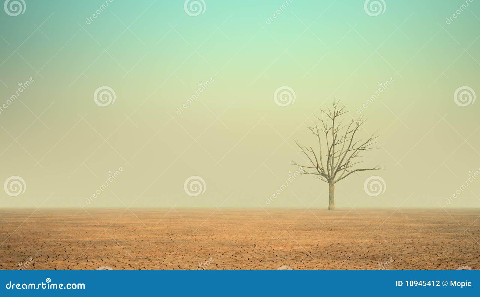 沙漠偏僻的结构树