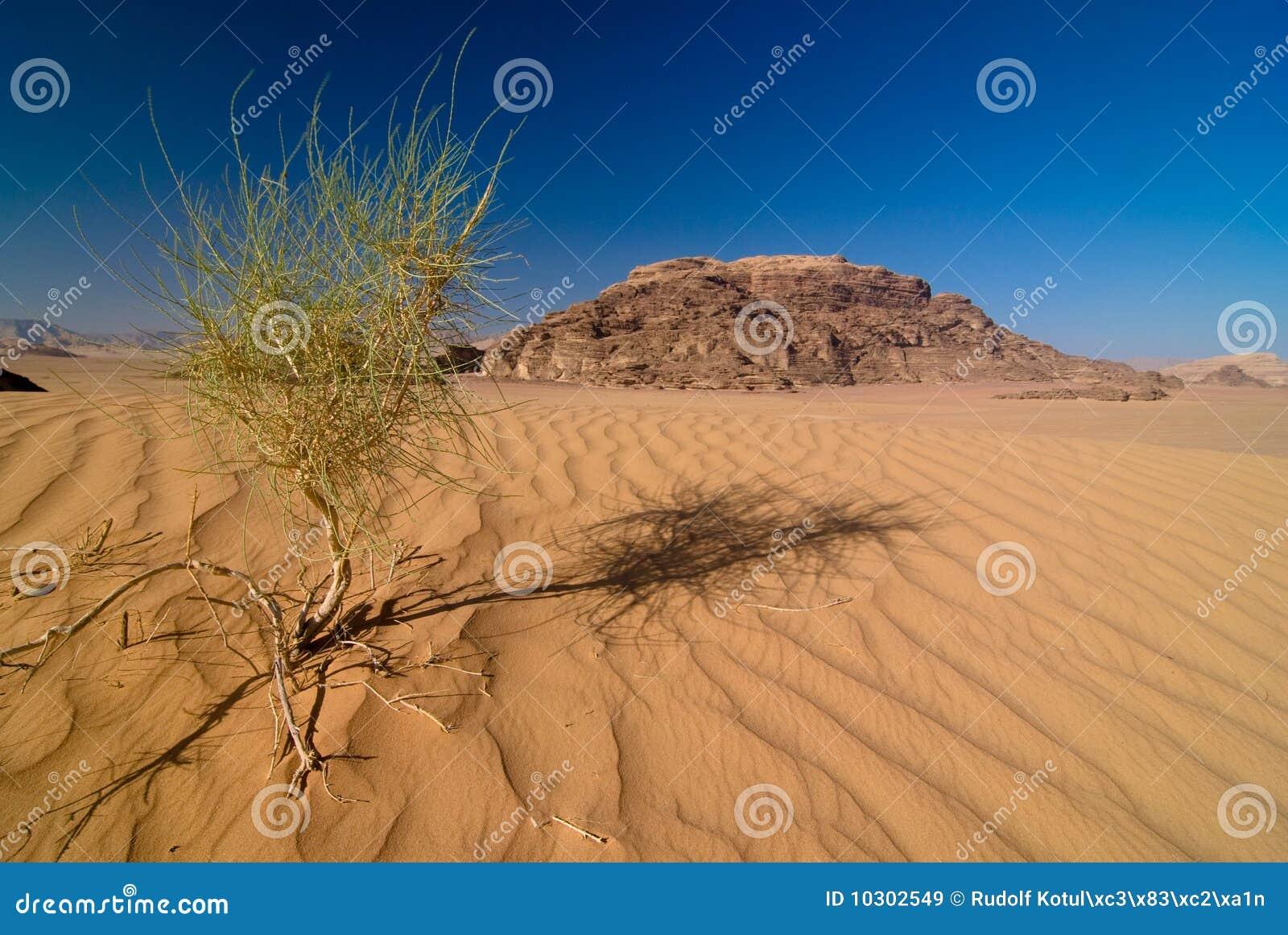 沙漠兰姆酒vadi
