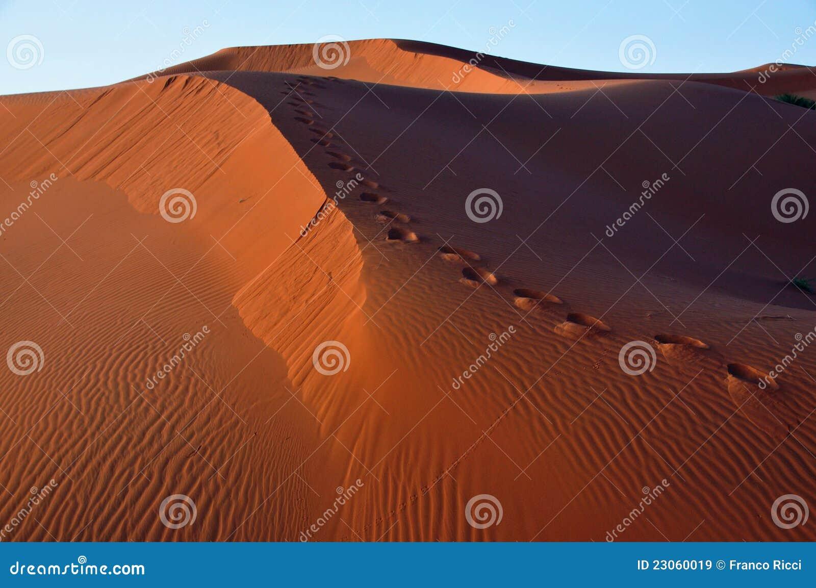沙漠沙丘脚步摩洛哥