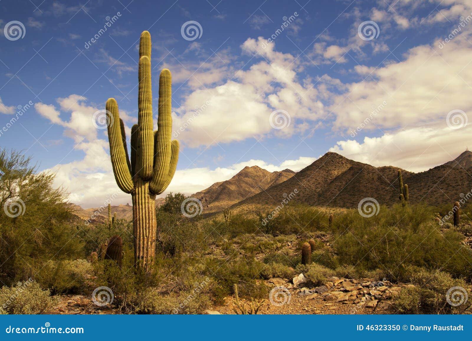沙漠仙人掌和山