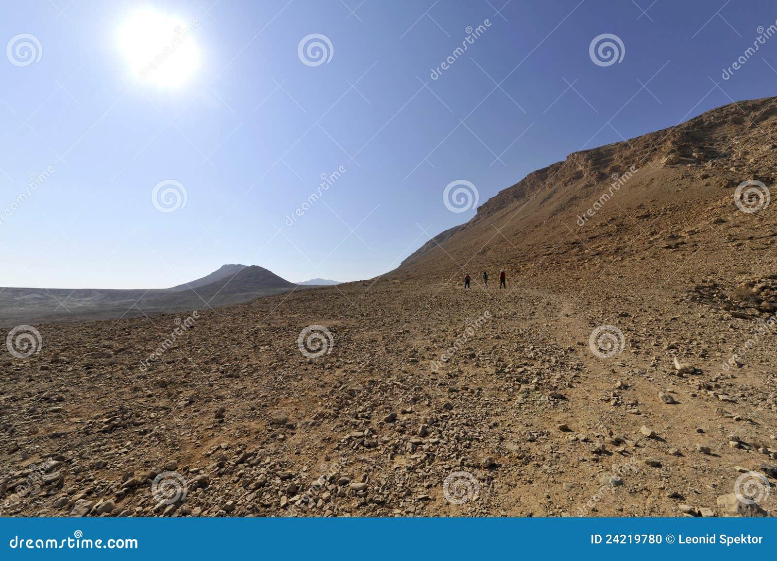 沙漠judea zohar牛拉车旅行的旱谷