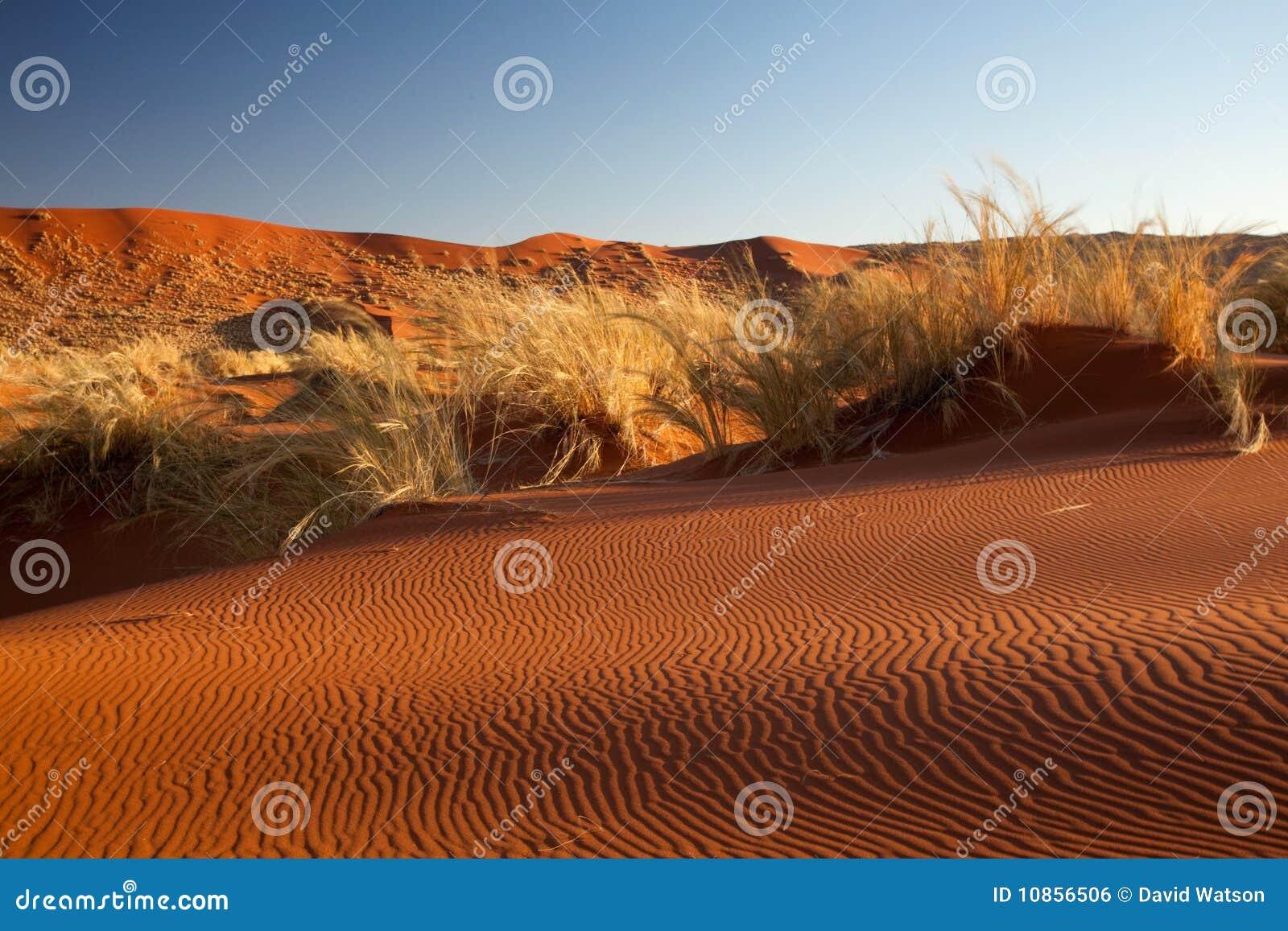 沙漠namib