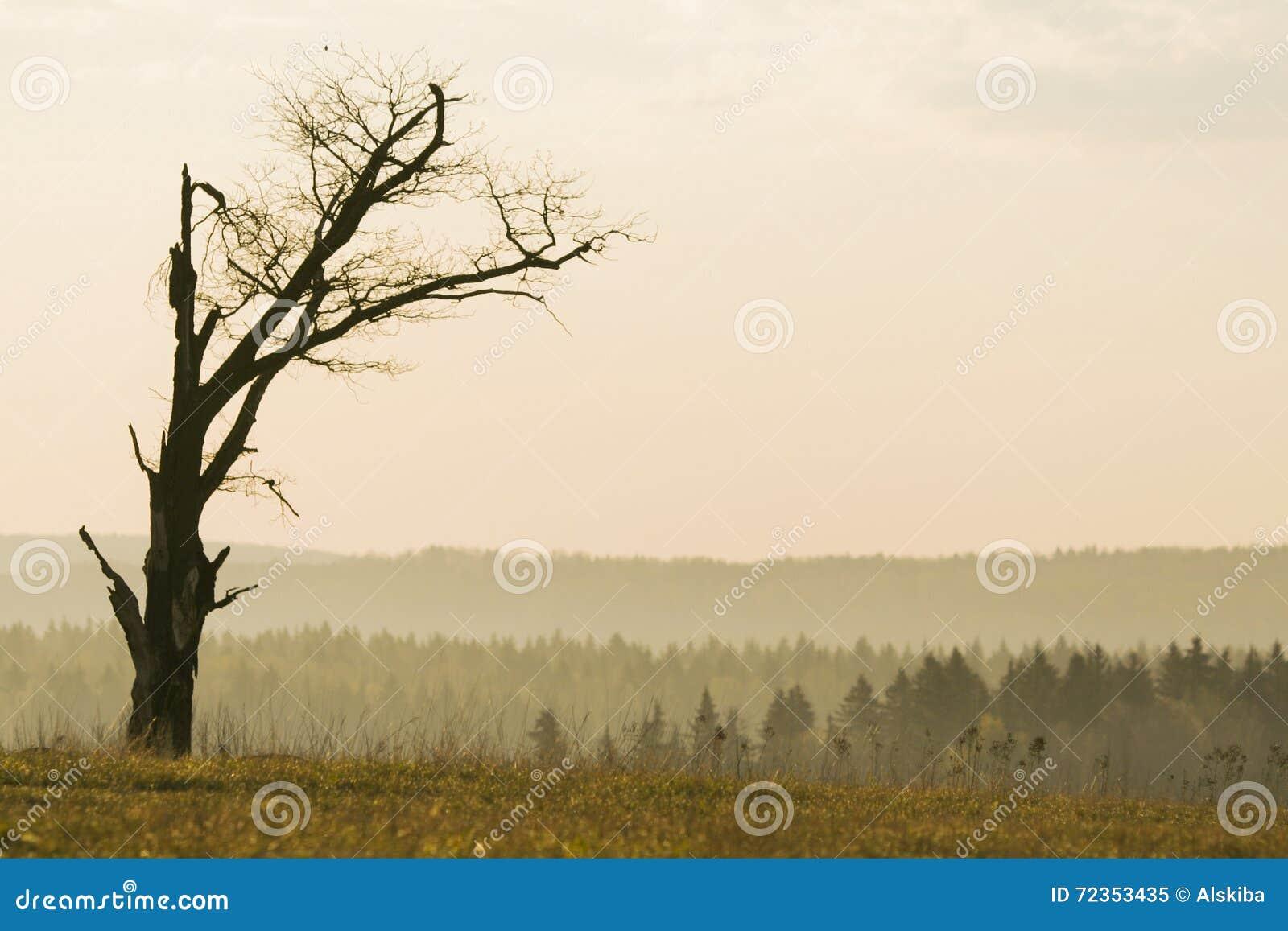没有叶子的偏僻的树