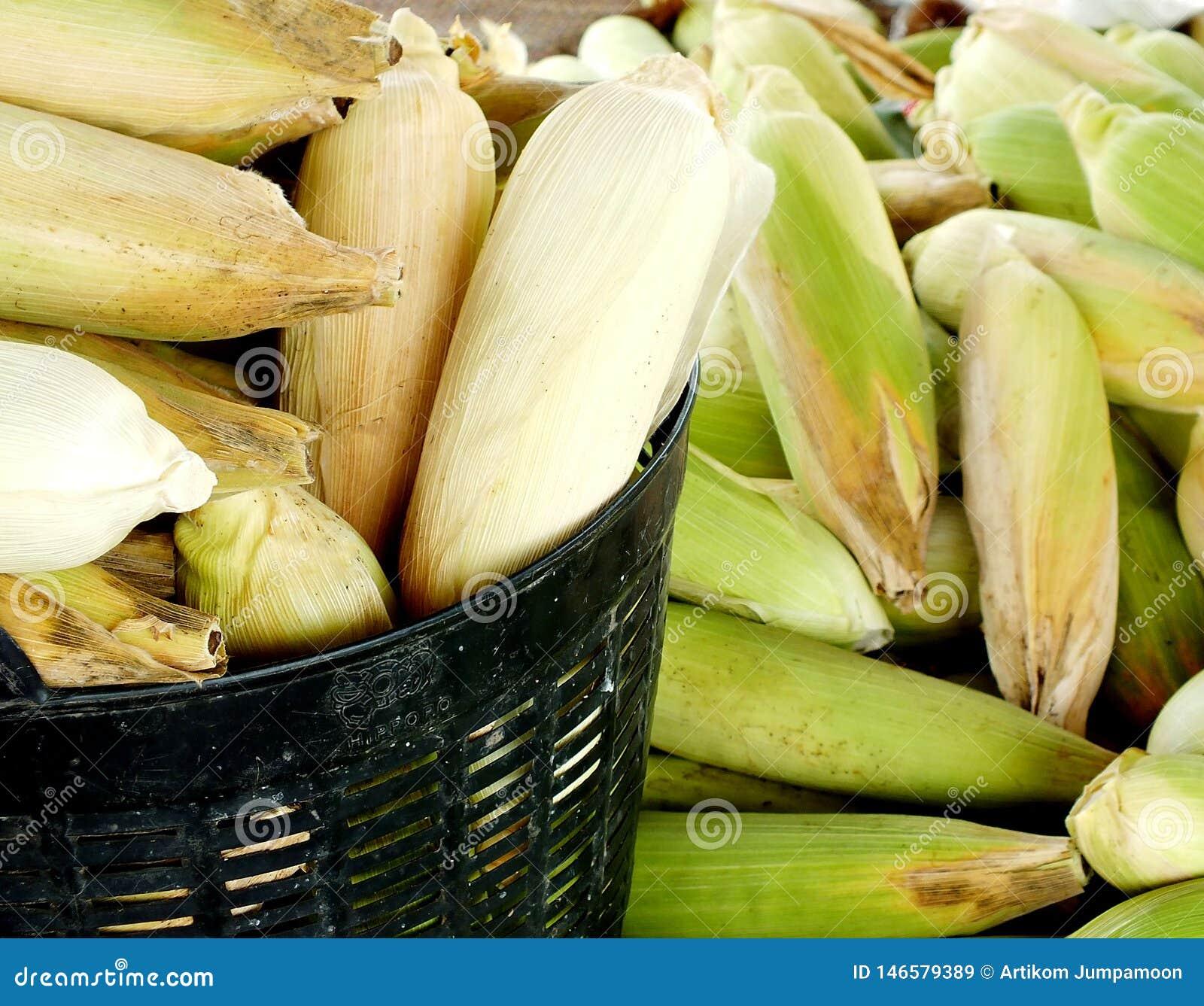 没有甜玉米,企业创造收入,包括农夫,与太阳光发光的背景