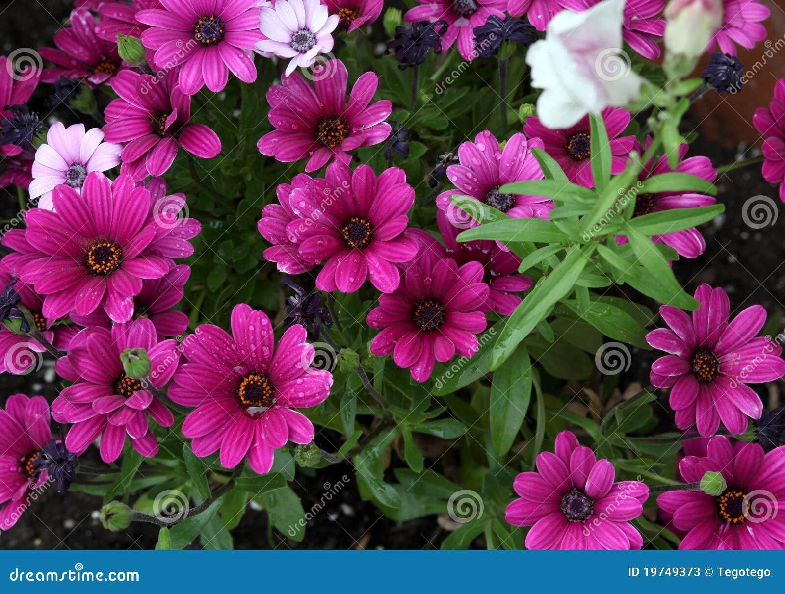 河床五颜六色的花