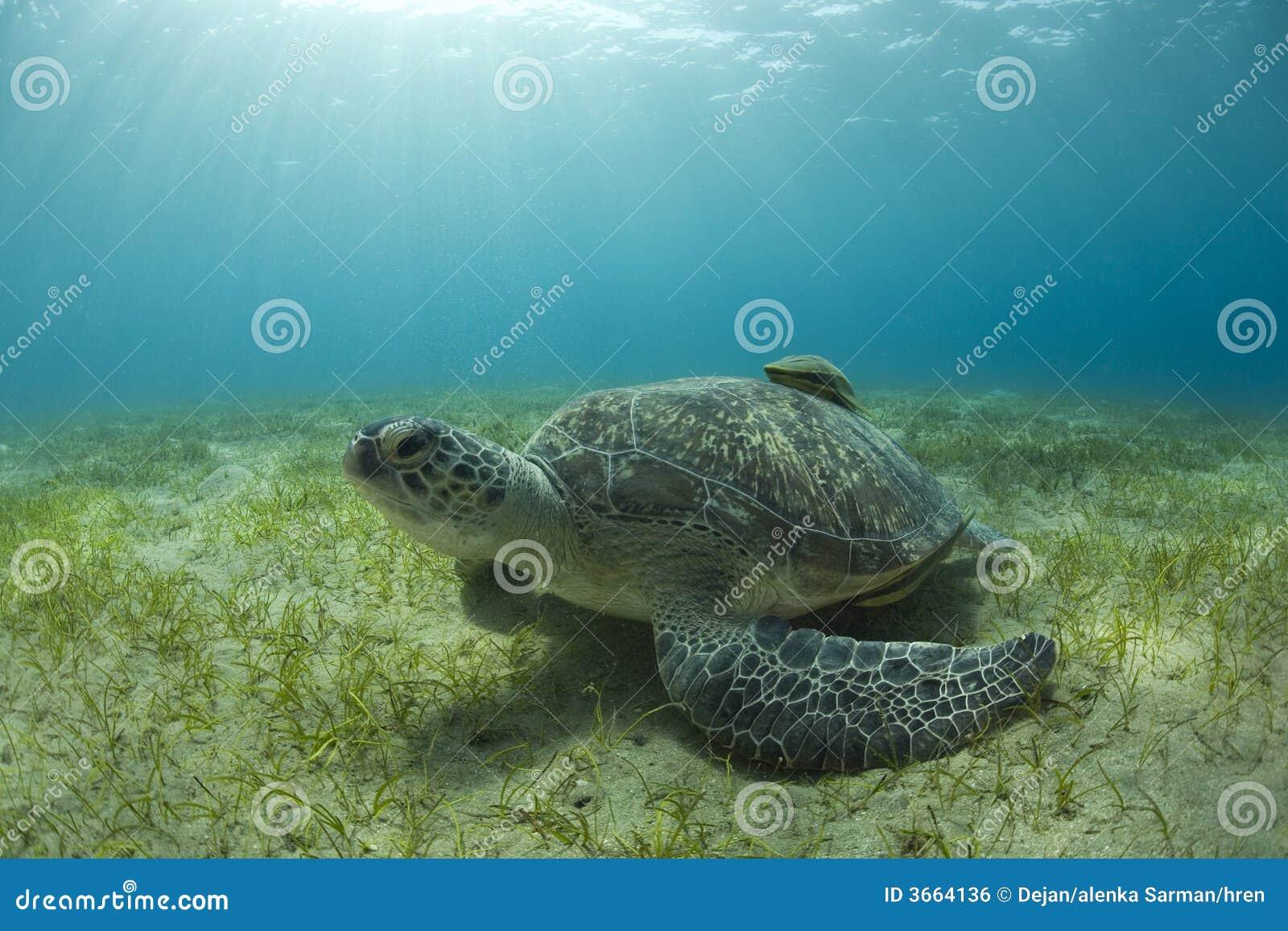 河床沙子海龟