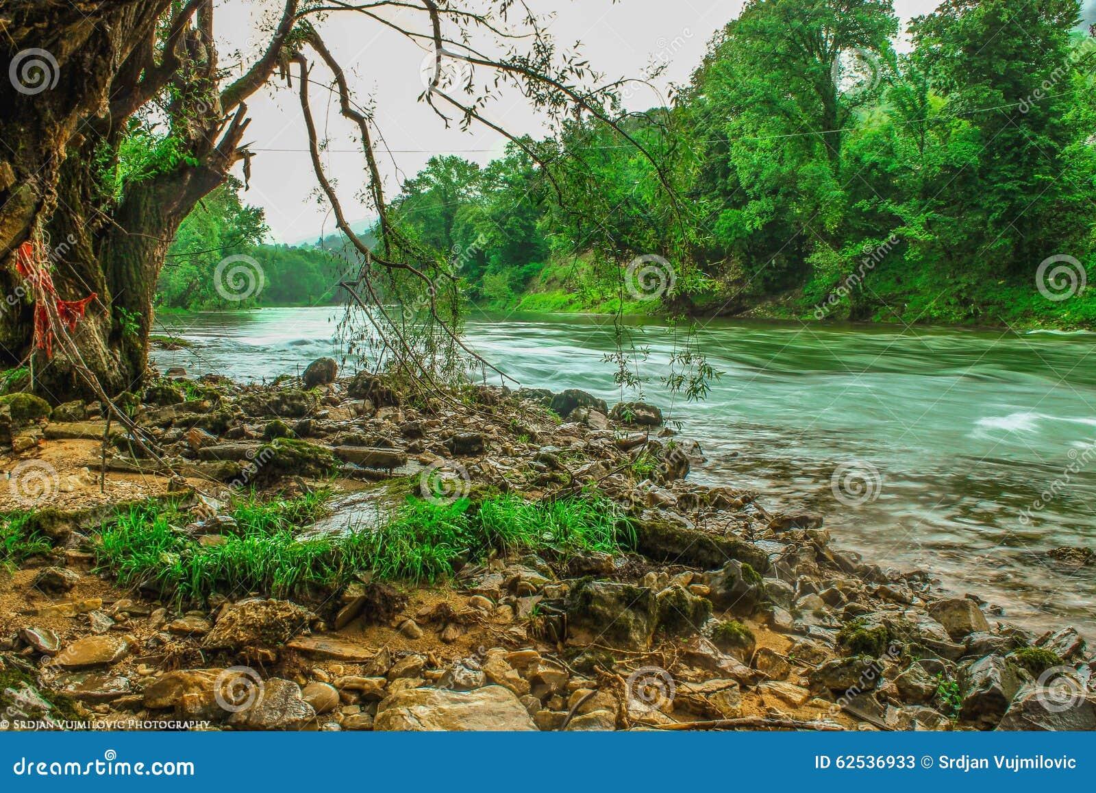 河流程在森林里