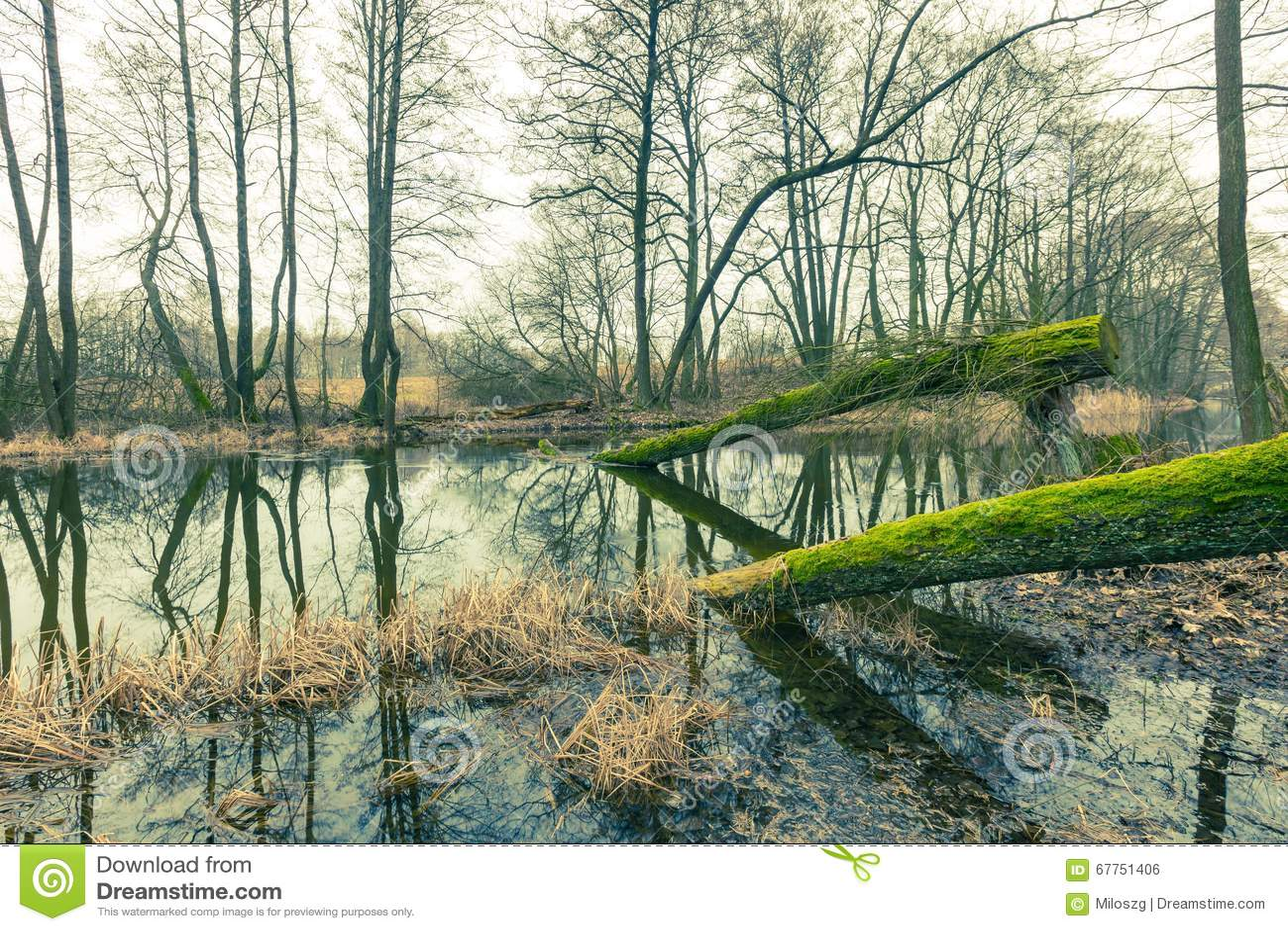 河的葡萄酒图片在春天森林里