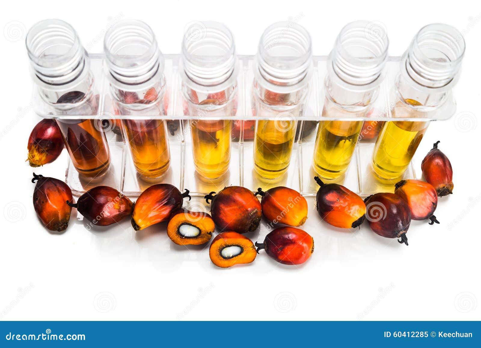 油棕榈树有试管的生物燃料生物剂量在白色背景