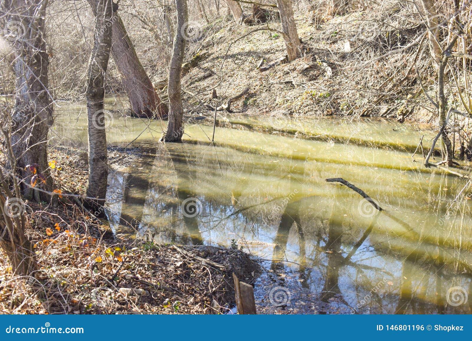 沼泽在森林里在一个晴朗的春日