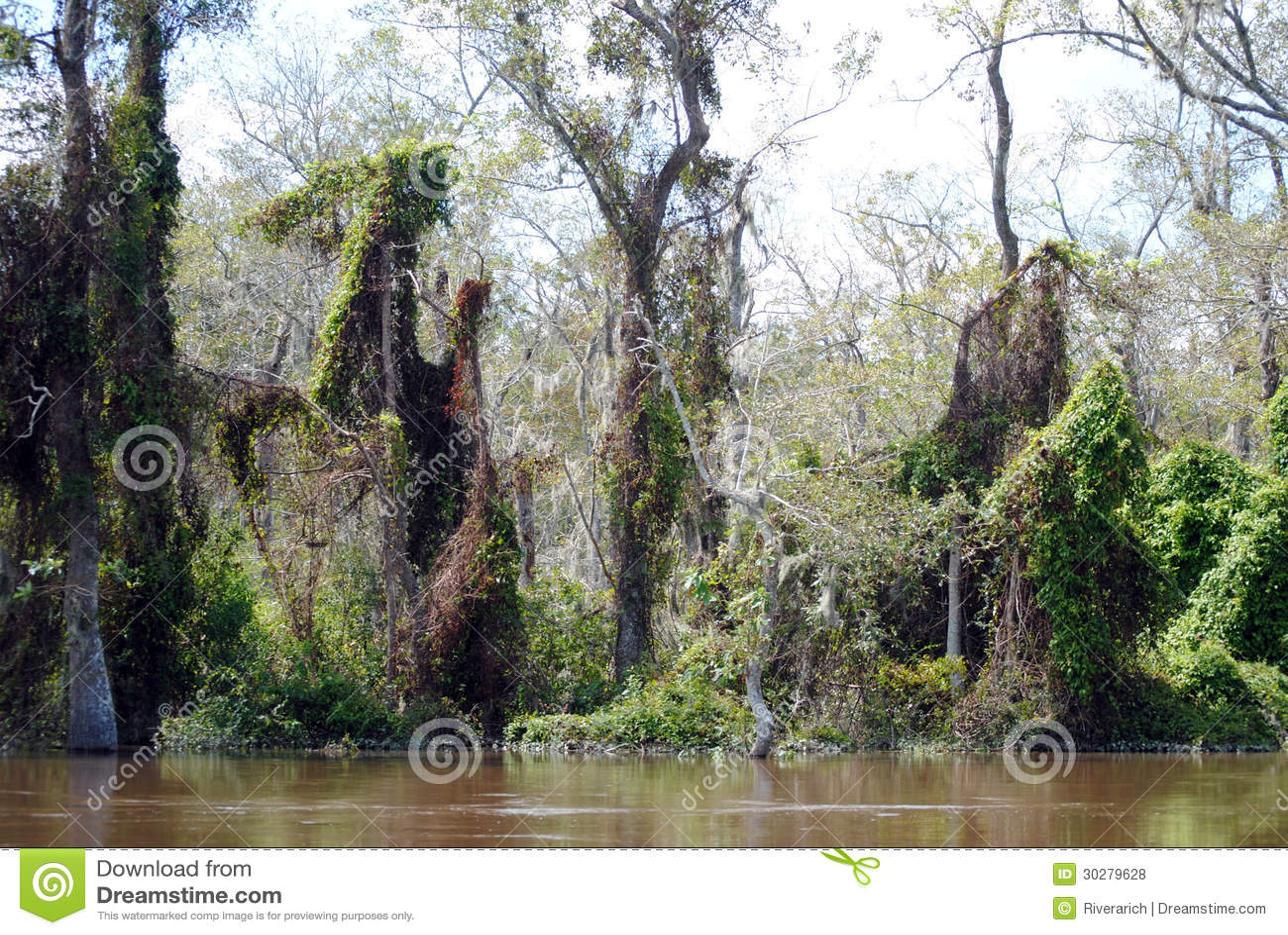 新奥尔良沼泽