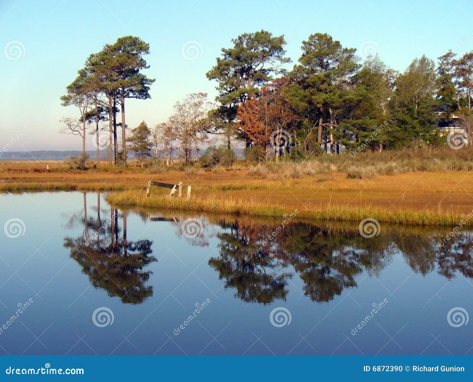 沼泽地反映