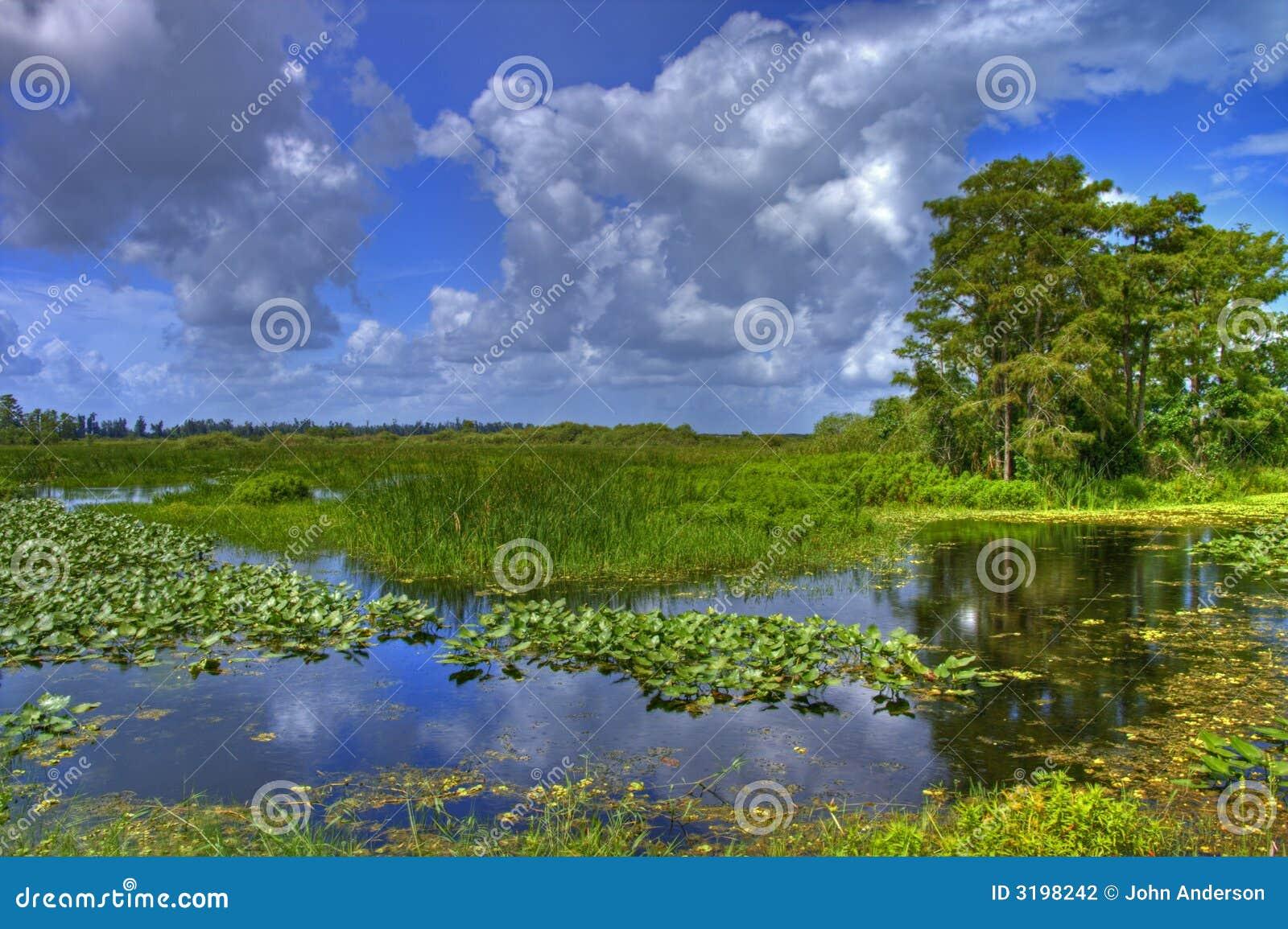 沼泽地横向