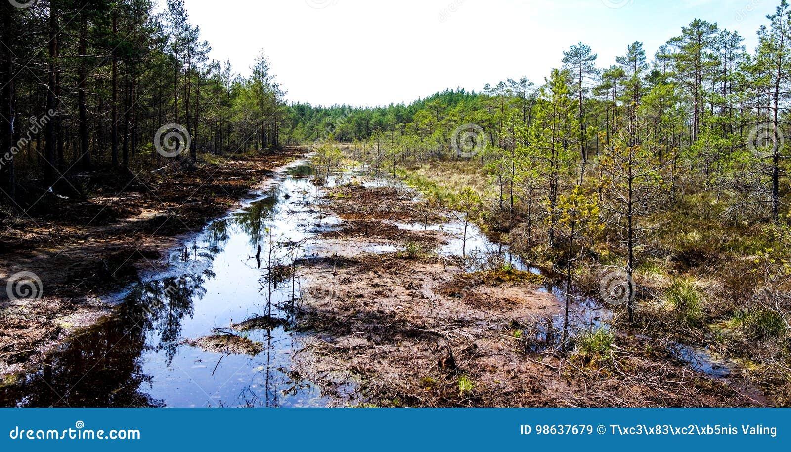 沼泽生态系的恢复
