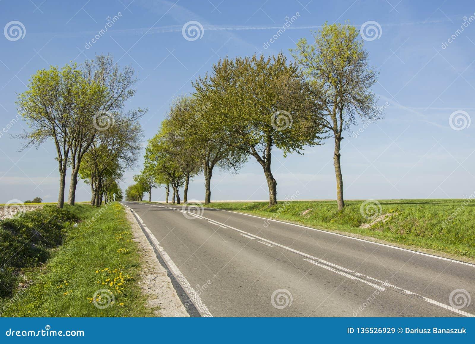 沿柏油路的树