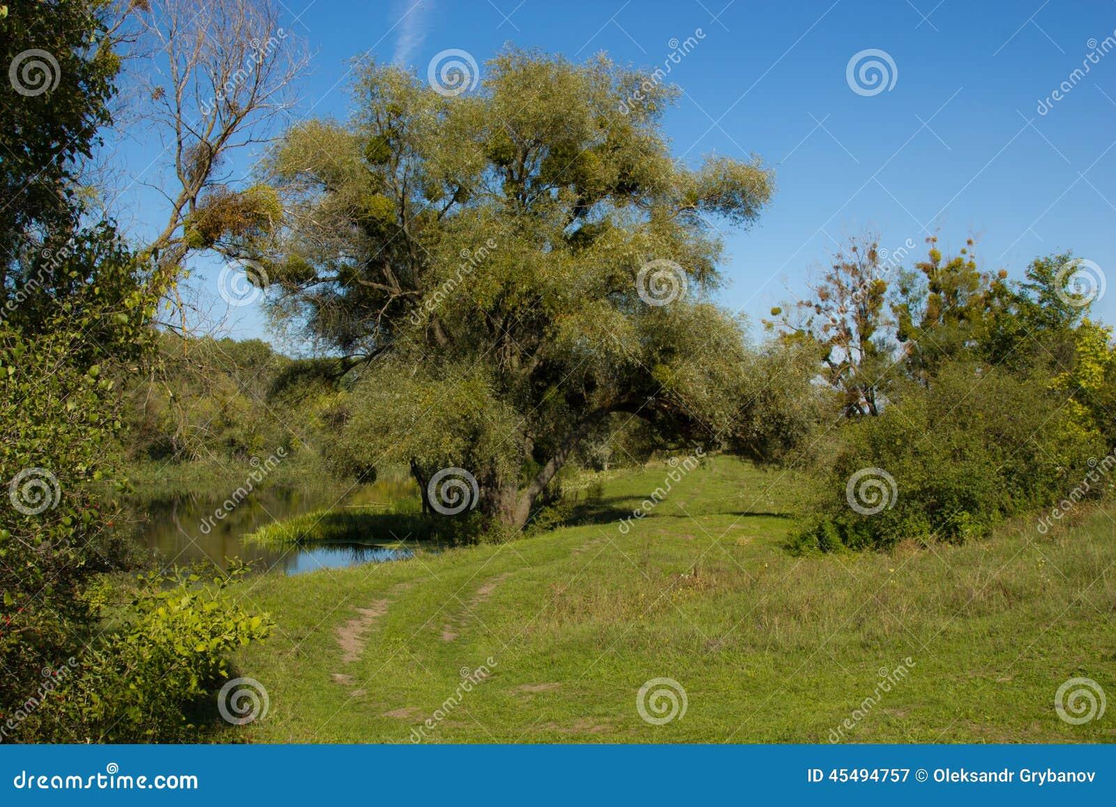 沿河的木小径