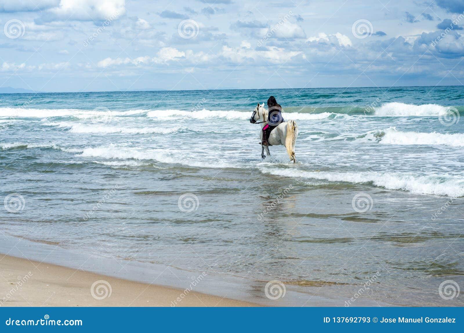 沿海滩的年轻女人骑马在他的白马
