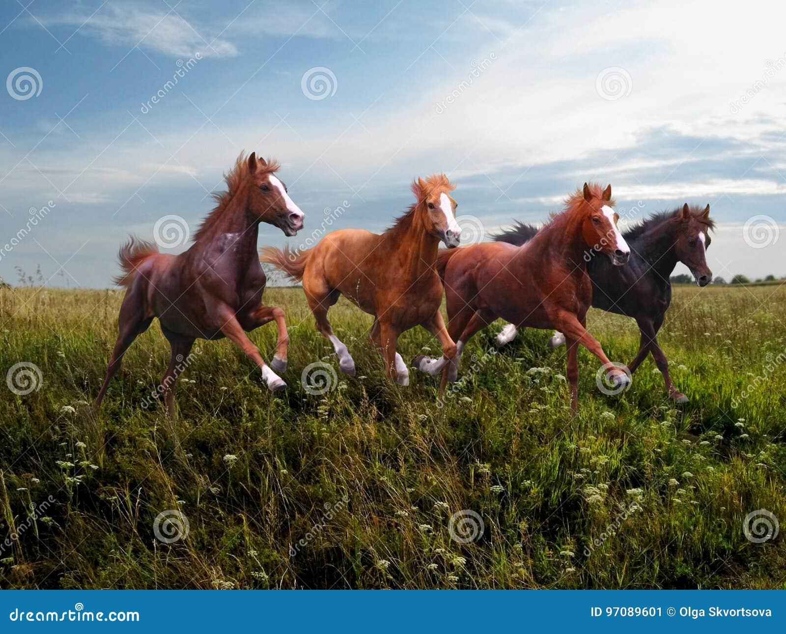 沿草的野马疾驰