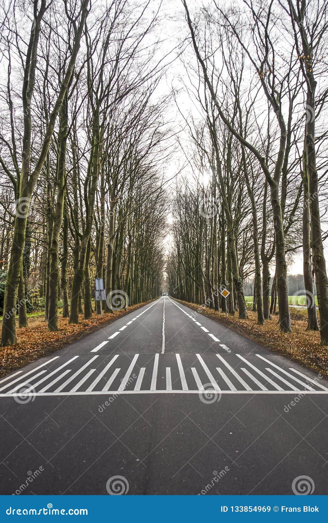 沿途有树的柏油路