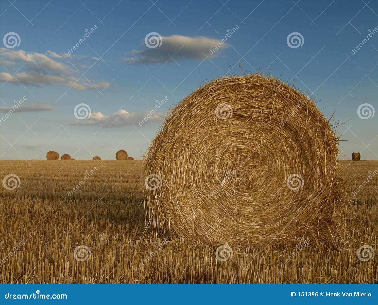 法国干草堆