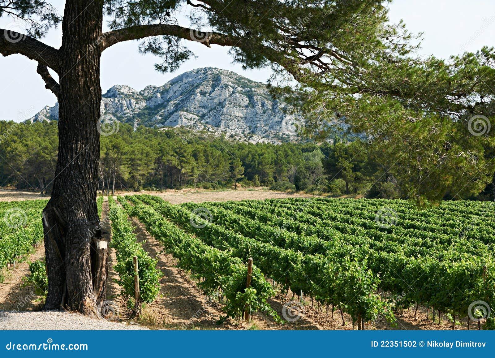 法国普罗旺斯葡萄园