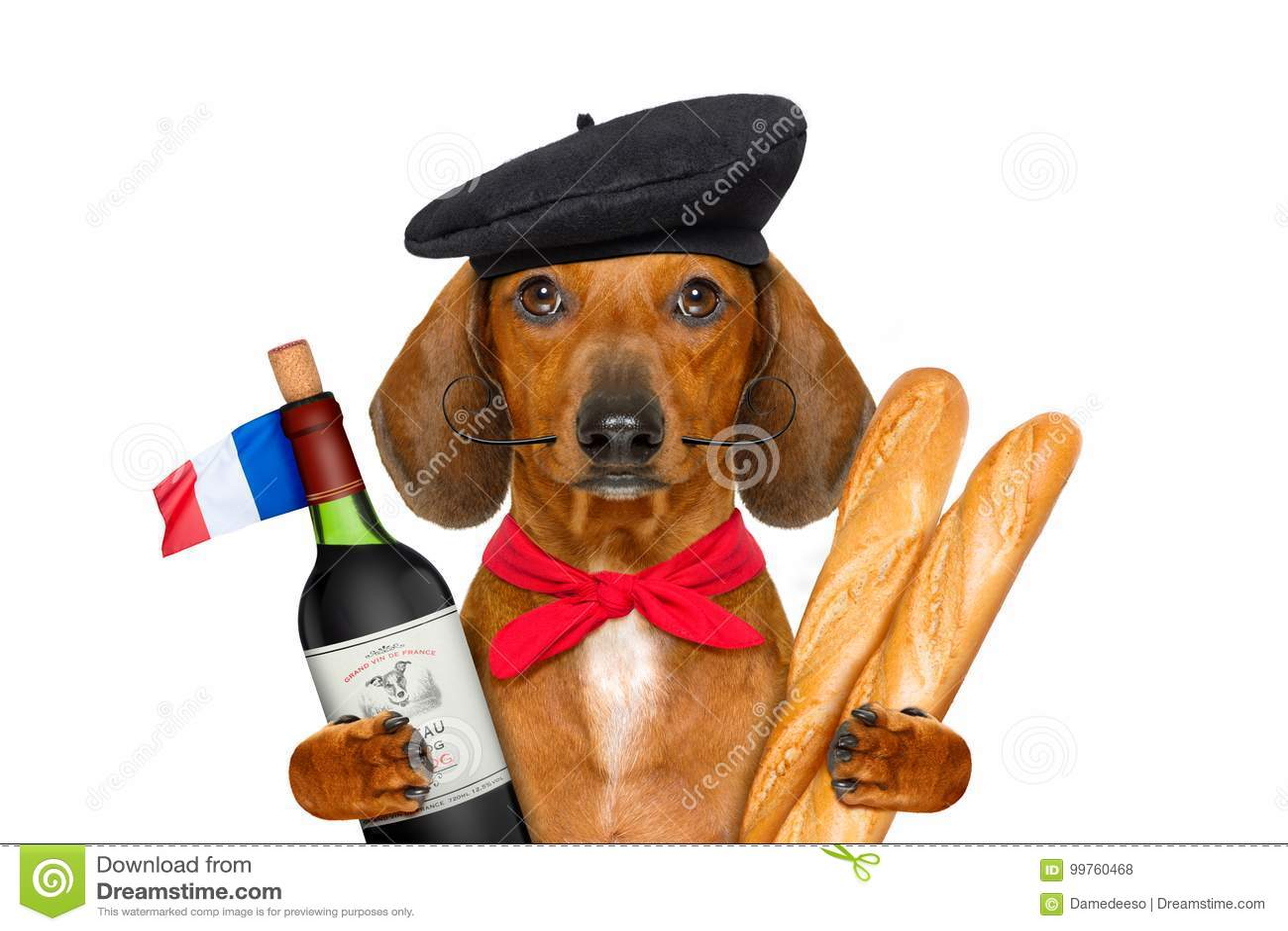 法国香肠狗