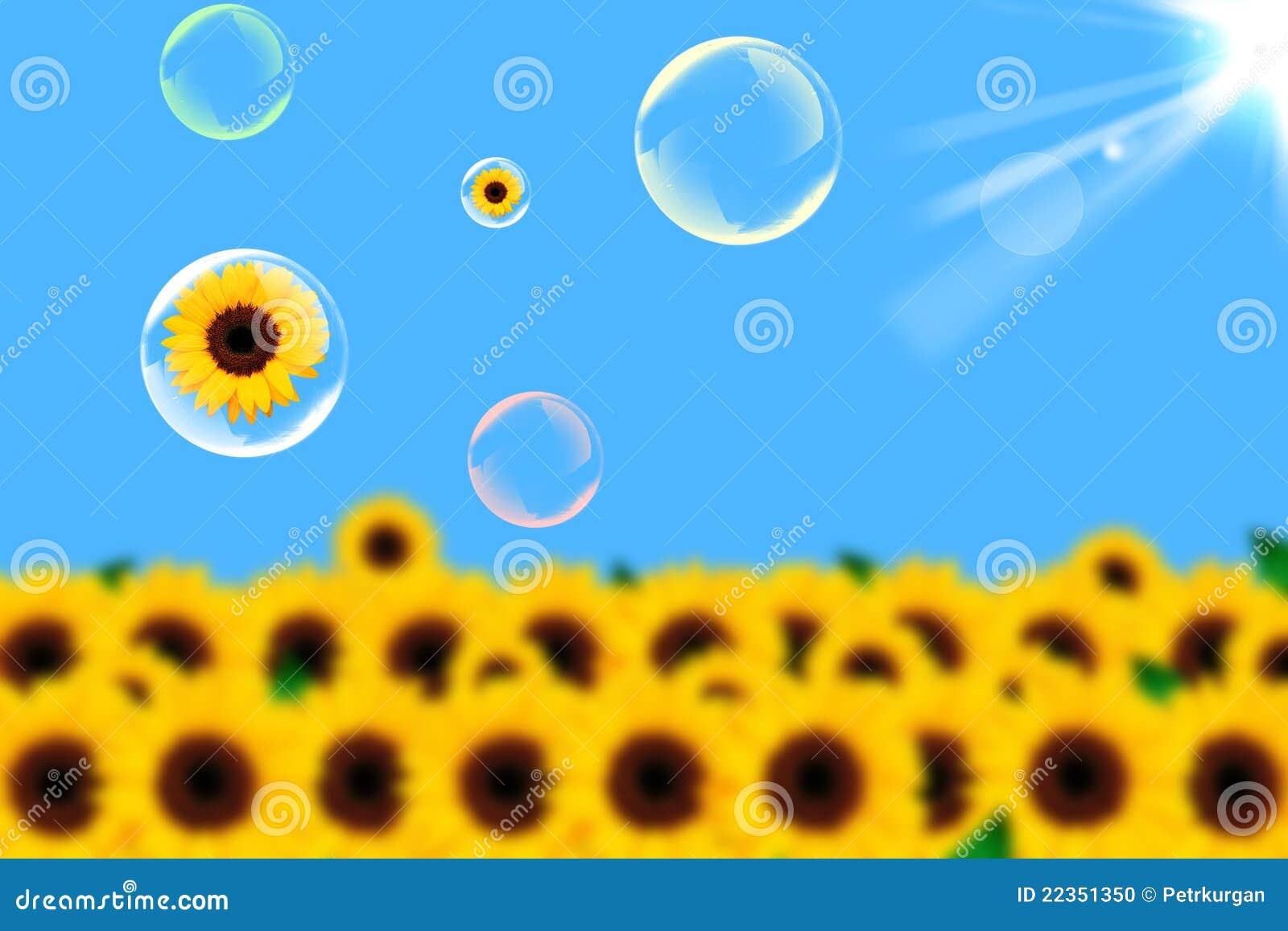 泡影肥皂向日葵