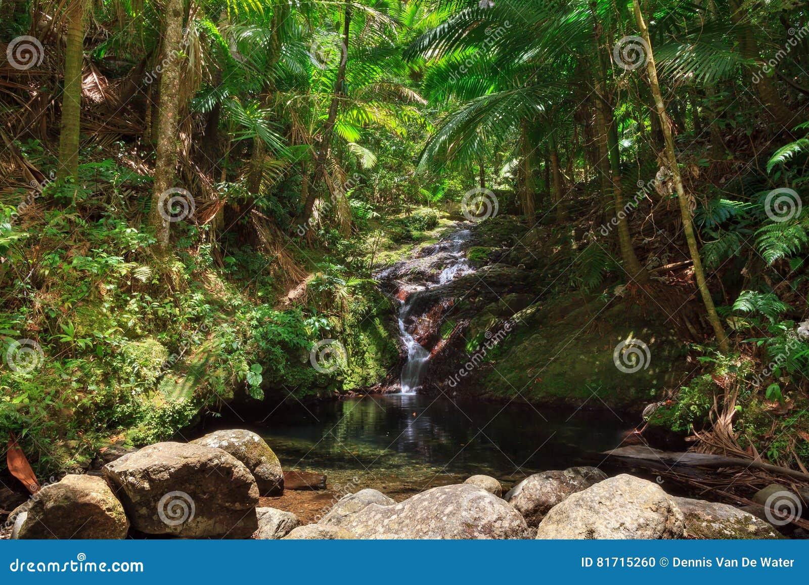 波多黎各密林小瀑布