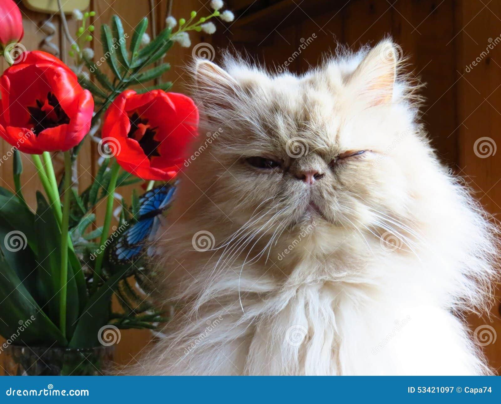 波斯猫成人小鹿的画象与花的