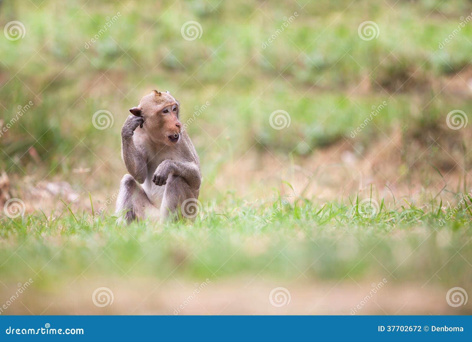 泰国的猴子