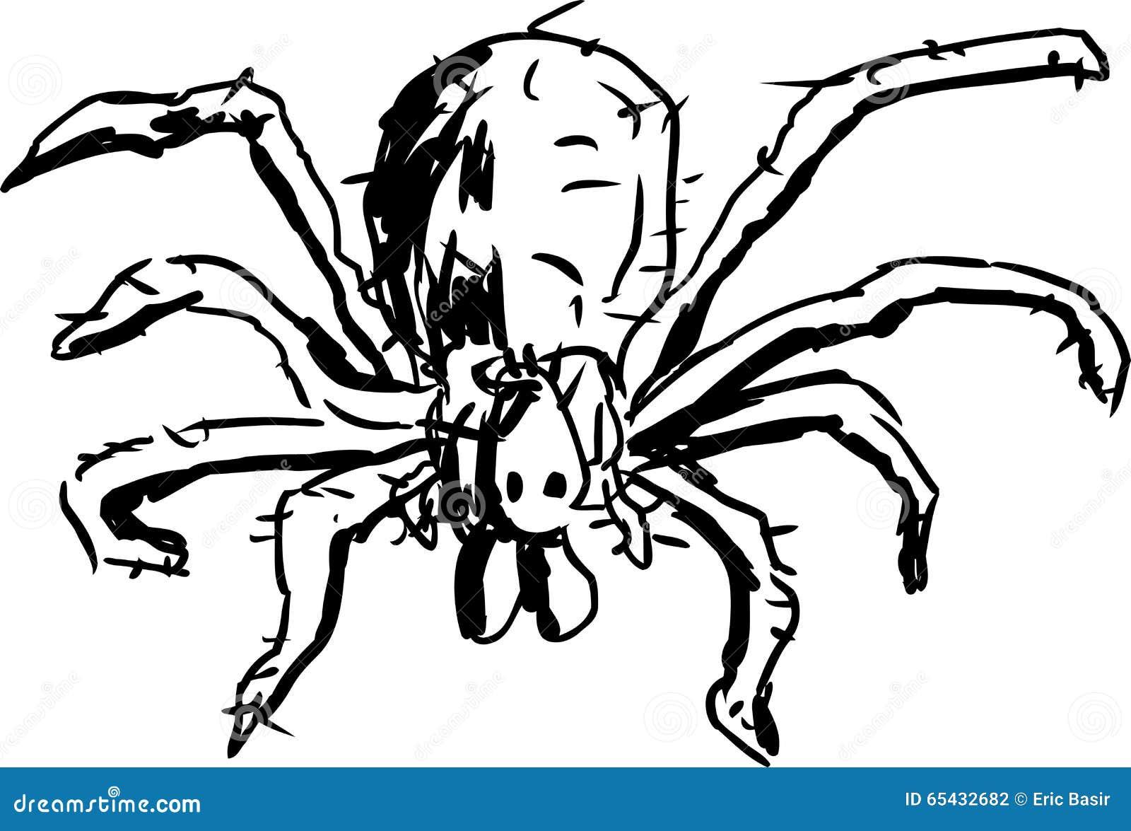 流浪汉蜘蛛概述