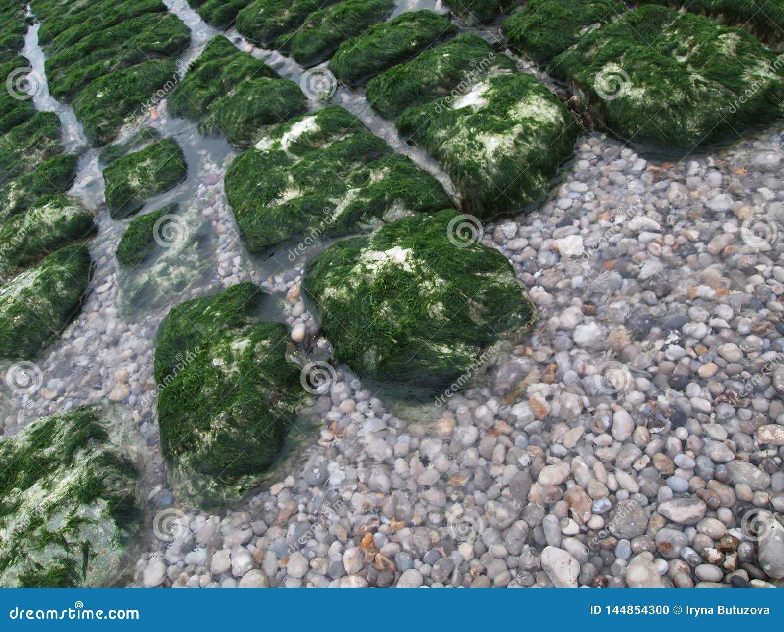 浅石头用明亮的海藻盖