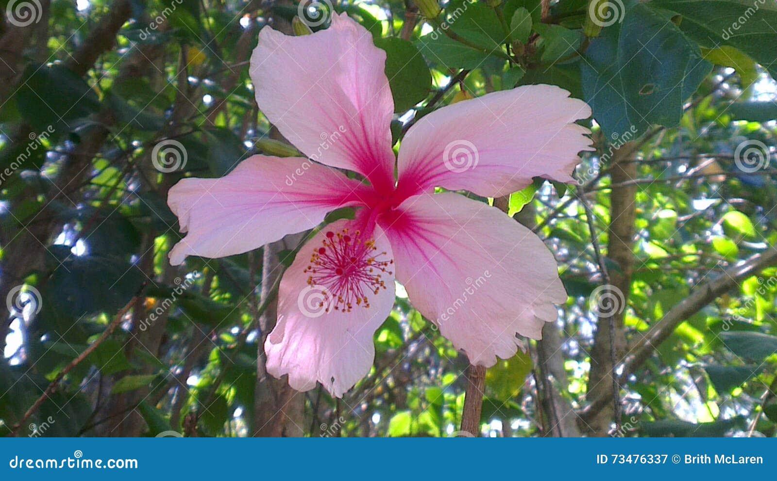 浅粉红色庭院的花