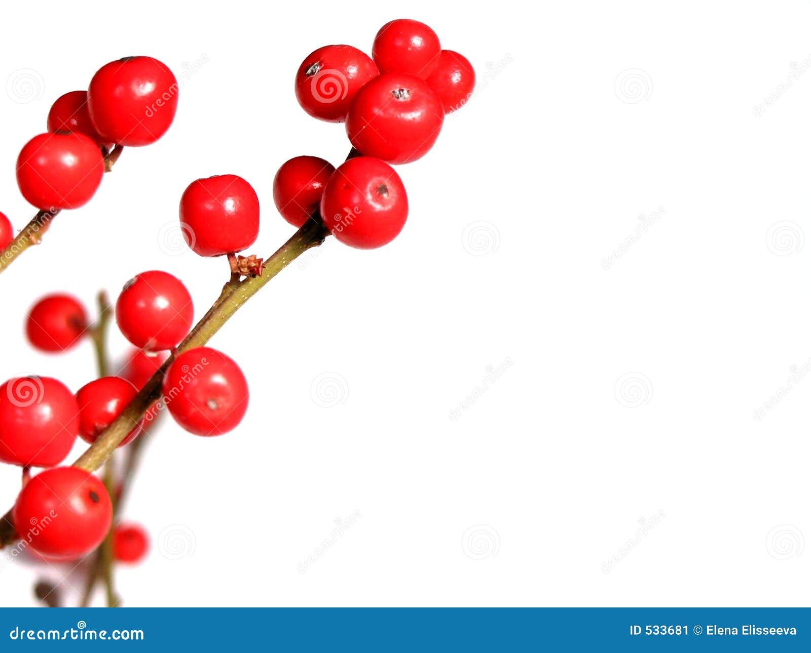 Download 浆果圣诞节红色白色 库存图片. 图片 包括有 红色, 白兰地酒, 明信片, 枝杈, 结构树, brander - 533681