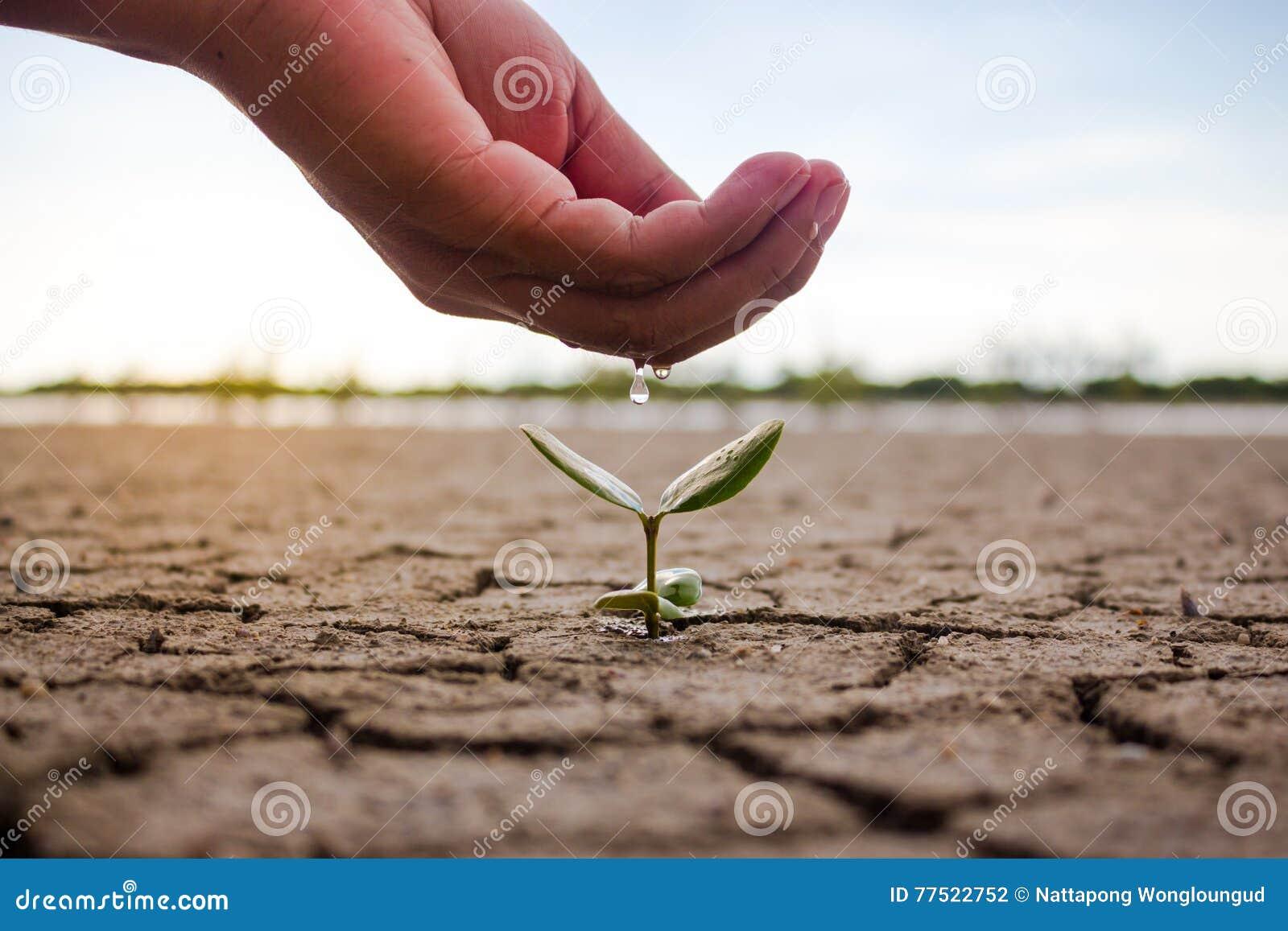 浇灌地面和树的手贫瘠