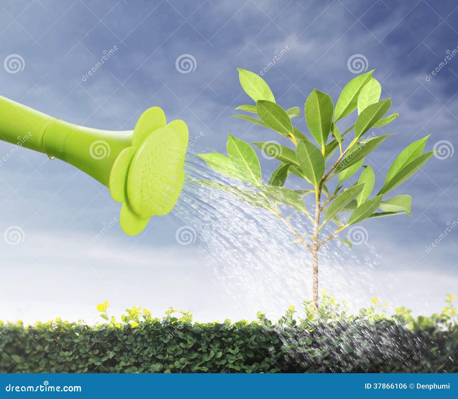 浇灌的年轻树