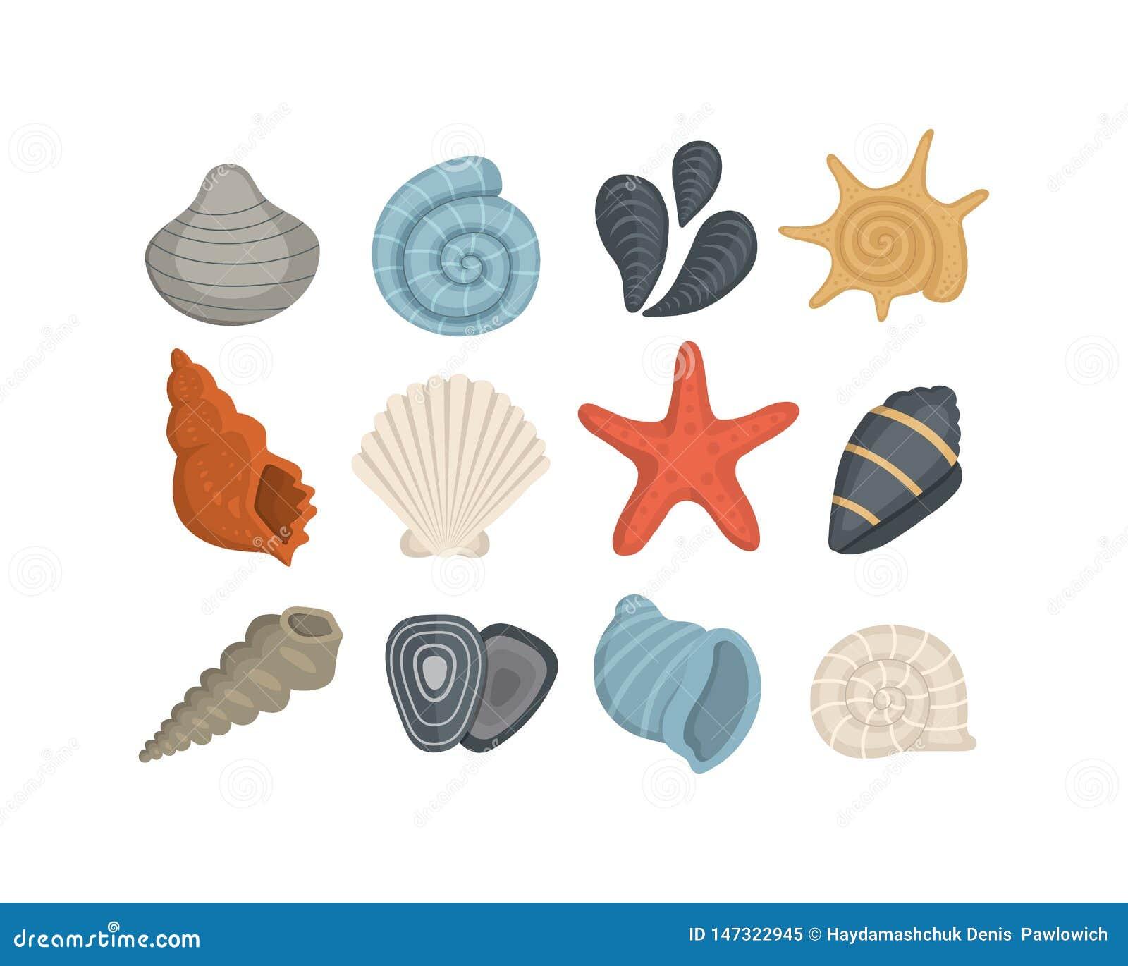 海壳在动画片样式的传染媒介象 设置蛤蜊软体动物 海洋海扇壳
