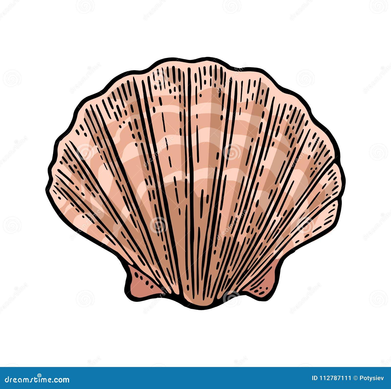 海壳扇贝 颜色板刻葡萄酒例证 背景查出的白色