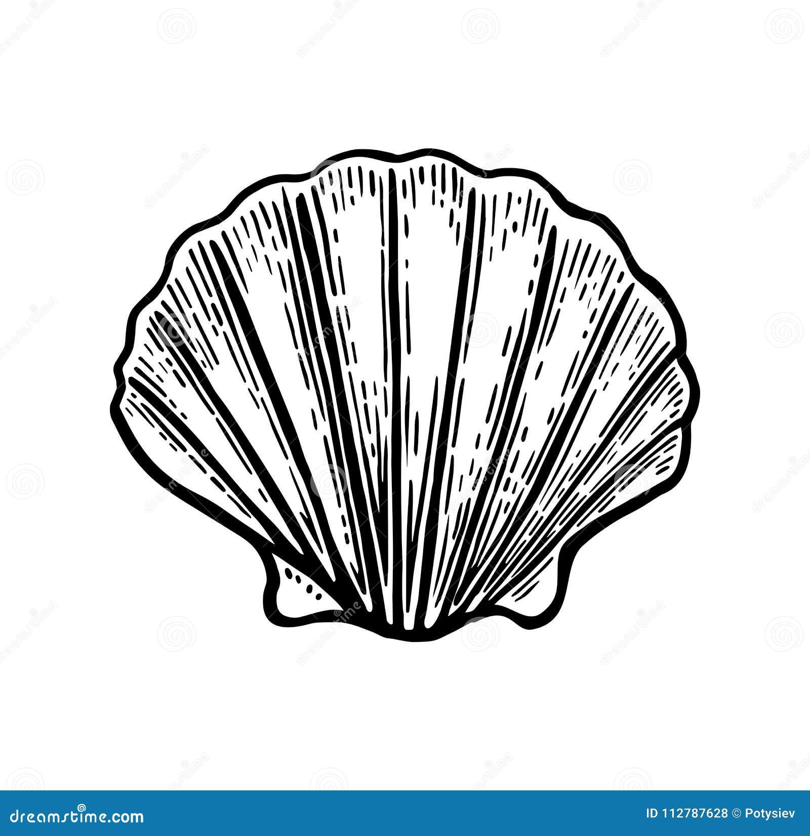 海壳扇贝 黑板刻葡萄酒例证 背景查出的白色