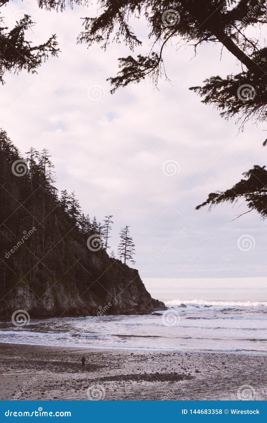 海岸的美丽的射击