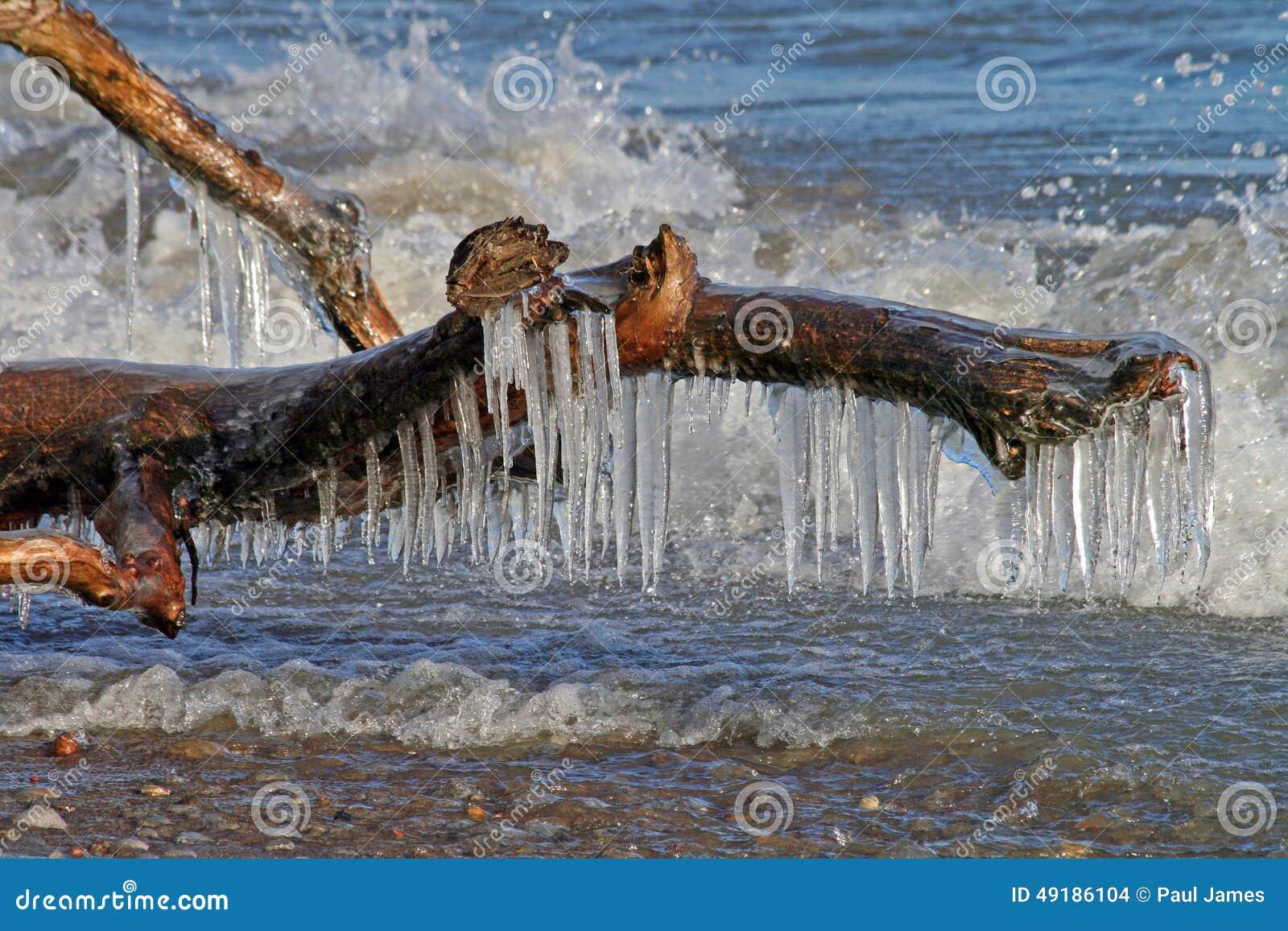垂悬从这棵下落的树的闪耀的冰柱,反对辗压海浪背景,似乎抓住所有